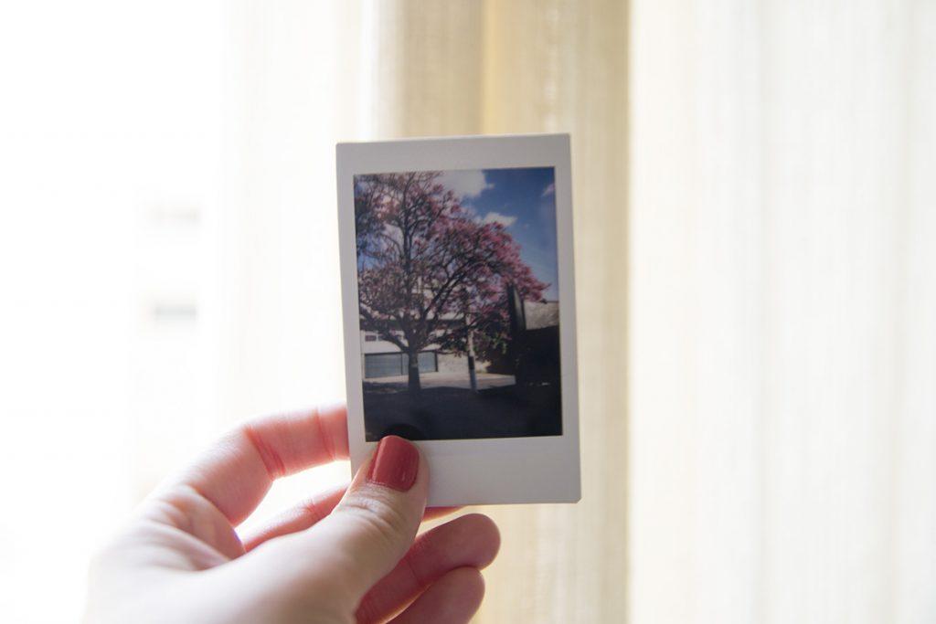 Essa árvore, foi a primeira foto que tirei ao ar livre com a câmera *-*
